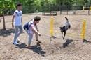 Dog Park at 5401 North