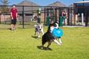 Miramesa - Dog Park