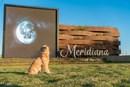 Meridiana - Soleil, Ambassador Dog