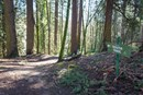 Kelly Marie - Trail