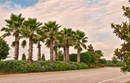 LakeNona_Palms